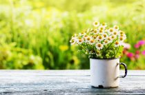 effects of spring on mental health